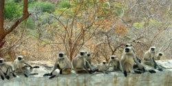 kumbalgarh-wildlife-1